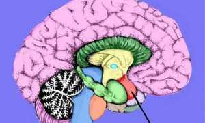 Низкое положение миндалин мозжечка что это такое