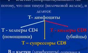 Цитотоксические т лимфоциты понижены