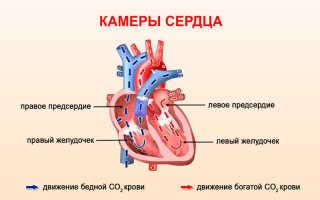 Атрофия левого желудочка сердца чем опасна симптомы