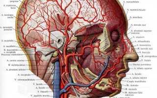 Извитость сонной артерии симптомы