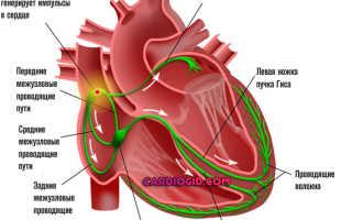 Желудочковая проводимость сердца