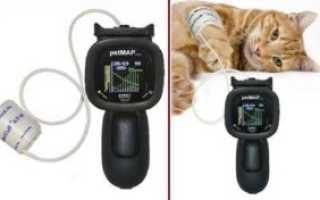 Артериальное давление у кошек норма