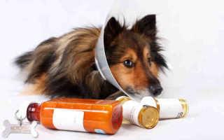 Аритмия у собак симптомы лечение