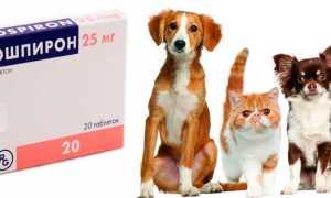 Верошпирон для собак при сердечной недостаточности